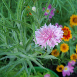 Gardening 2010, Part Three - 101_3964.JPG