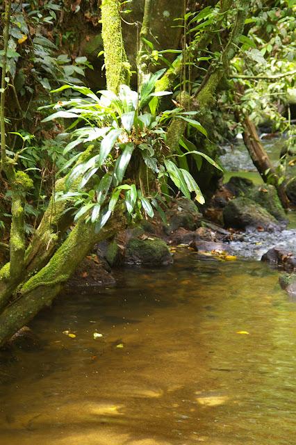 Petit cours d'eau à Caçandoca (Ubatuba, SP), 21 février 2011. Photo : J.-M. Gayman