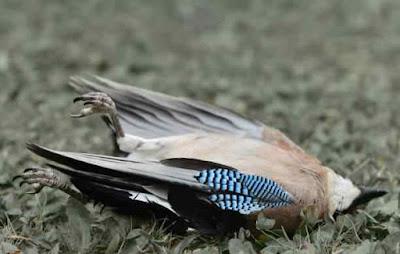 भारत की सबसे रहस्यमयी घाटी, जहां पक्षी आकर करते हैं सुसाइड!भारत की सबसे रहस्यमयी घाटी, जहां पक्षी आकर करते हैं सुसाइड!