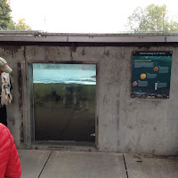 Issaquah Salmon Hatchery Tour - IMG_0492.JPG