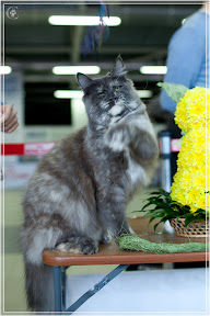cats-show-24-03-2012-fife-spb-www.coonplanet.ru-039.jpg