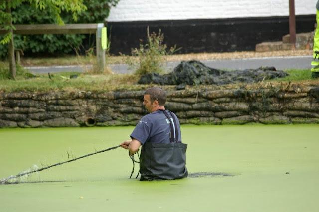 Pond Clearance - 17-07-2010 - pondamonium%2B%252811%2529.jpg