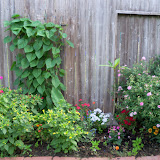 Gardening 2011 - 100_8174.JPG