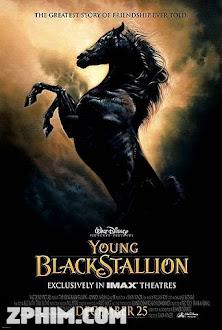 Chú Ngựa Ô Choai - The Young Black Stallion (2003) Poster