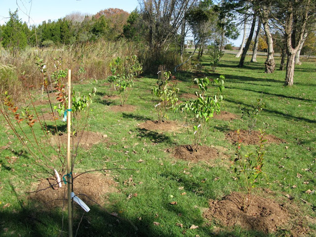 Hammo Planting - Shannon Schiesser - IMG_4966.JPG