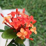 Gardening 2012 - IMG_3848.JPG