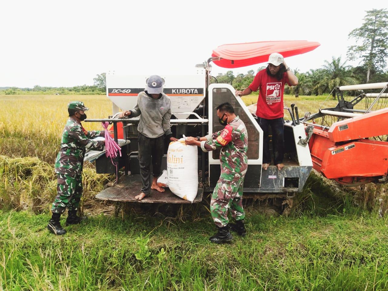 Bentuk Kemanunggalan TNI, Babinsa Penajam Jadi Petani