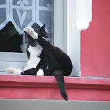 Coole Cat