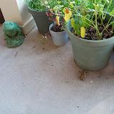 Gardening 2012 - 115_2948.JPG
