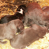 Star & True Blues February 21, 2008 Litter - HPIM0903.JPG