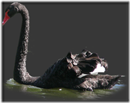 cisnes-buscoimagenes-26_thumb