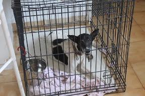 Other Ways We Help - Boliqueme Dog