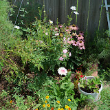 Gardening 2010, Part Three - 101_5070.JPG