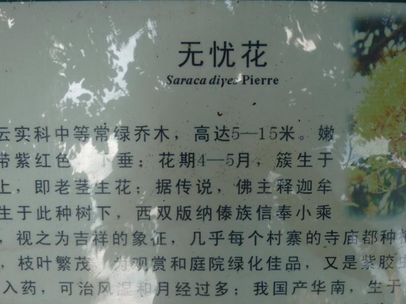 Chine .Yunnan . Lac au sud de Kunming ,Jinghong xishangbanna,+ grand jardin botanique, de Chine +j - Picture1%2B613.jpg