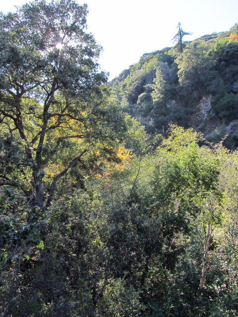 a variety of trees sticking out of the canyon and on the ridge above