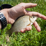 20160528_Fishing_Stara_Moshchanytsia_033.jpg
