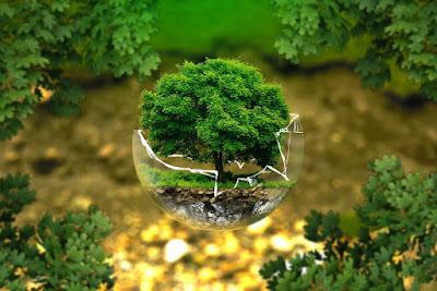 पर्यावरण क्या हैं? संरक्षण तथा उनके महत्व-Anokhagyan.in