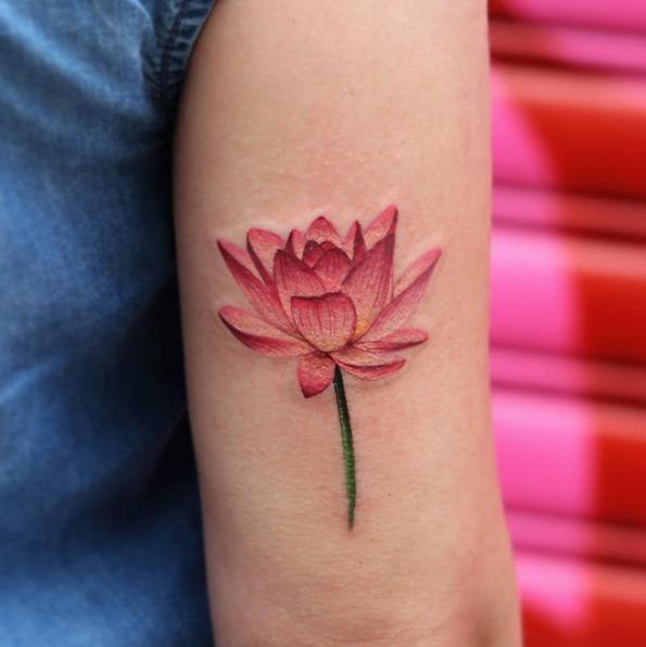 Esta linda flor de lótus