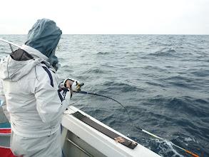 Photo: どんどん釣ります。