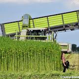 Dutch Harvest Field update #8
