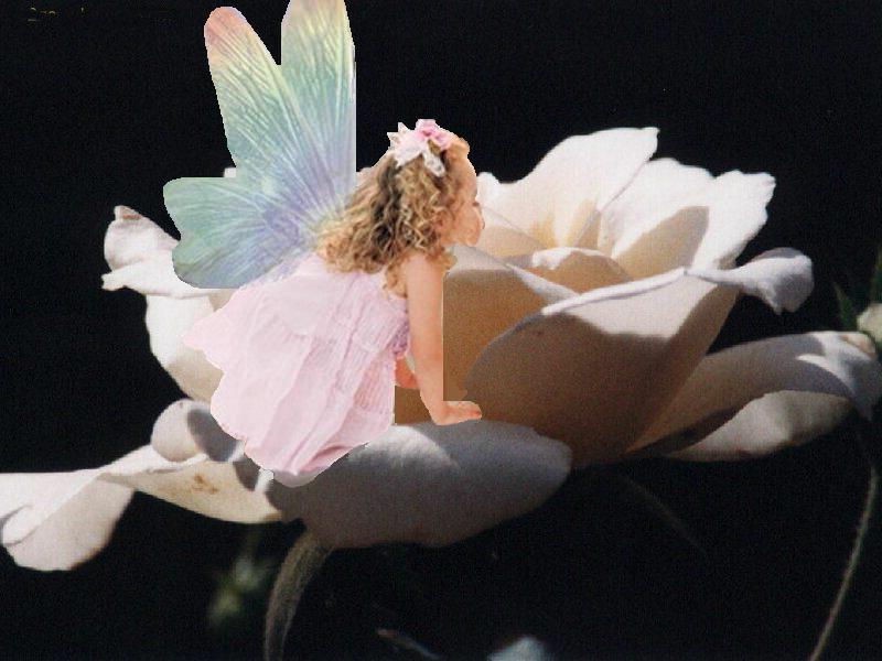Little Fairy Baby, Fairies Girls
