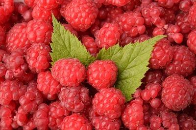 raspberries-1476204_1280