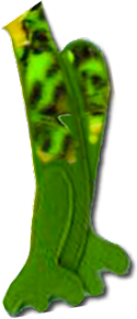 FrogRightLeg