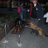 KNON-honden in Emmen - DSC_0810.JPG