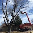 Tree Questions ... Ask an expert Board Certified Master Arborist / BCMA TX-3236B