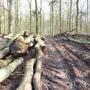 Af en toe moet een bos uit gedund worden. De omgezaagde bomen worden naar het pad gesleept.