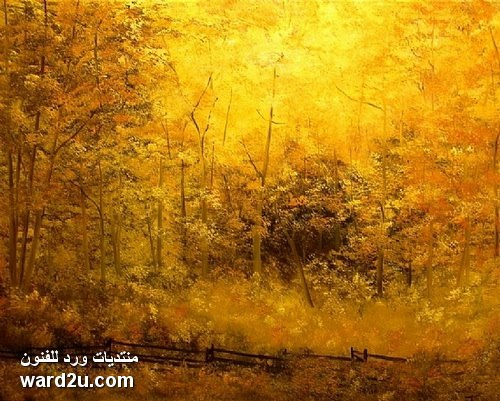 ألوان  دافئة و طبيعة مبهرة فى لوحات الفنانة Connie  Tom