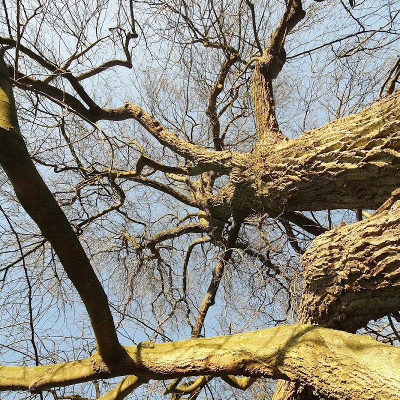 Stowe_Trees_19.JPG
