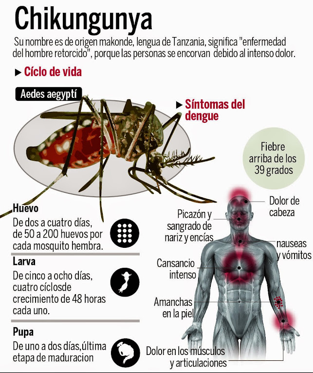 https://lh3.googleusercontent.com/-Tf4Fj8xauBw/U6mfbpsK1JI/AAAAAAAAHHE/B-xkuO6dIAA/w643-h766-no/chikungunya1.jpg%20%20%20%20%20%20%20%20