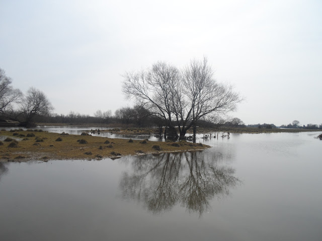 The Great Ouse near Earith