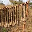 2012-09-24 09-20 Miotły robione z rozstrzępionych badyli.JPG