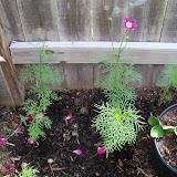 Gardening 2010 - 101_1708.JPG