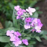 Gardening 2012 - IMG_2732.JPG