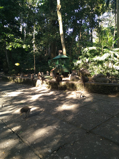 monyet bebas