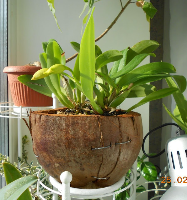 Горшки для орхидей - Страница 8 DSCN3165