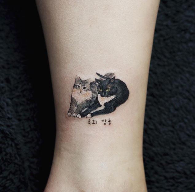 Este par perfeito de gatos