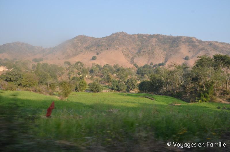 Rizières Udaipur