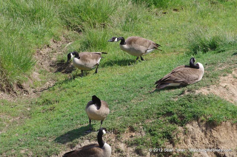 05-11-12 Wildlife Prairie State Park IL - IMGP1561.JPG