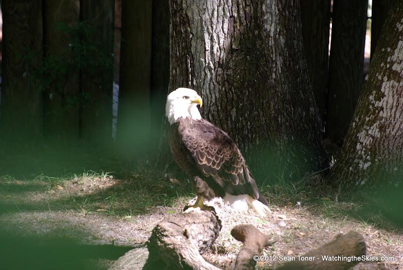 04-07-12 Homosassa Springs State Park - IMGP4569.JPG