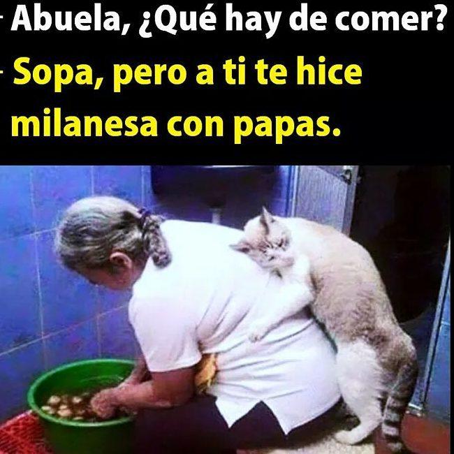 Imagenes-graciosas-2017-para-whatsapp1