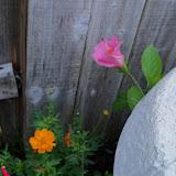 Gardening 2011 - 100_8203.JPG