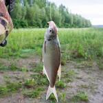20160624_Fishing_Bakota_169.jpg
