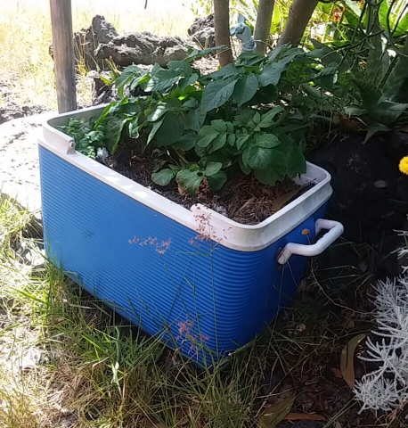 She Proves That You Donu0027t Need To Go Out And Buy Expensive Bags Of Topsoil.  Nor Do You Need To Spend Money For Containers. Dead Coolers And Discarded  ...