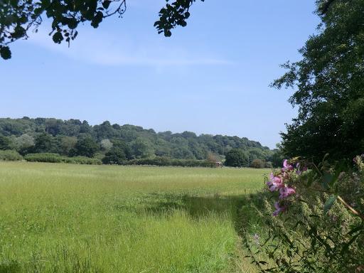 CIMG6119 Water meadows by Kent Brook