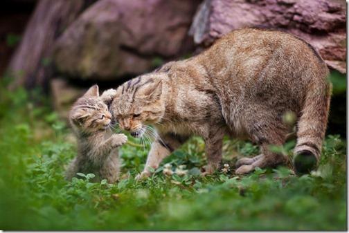 fotos de gatos (16)