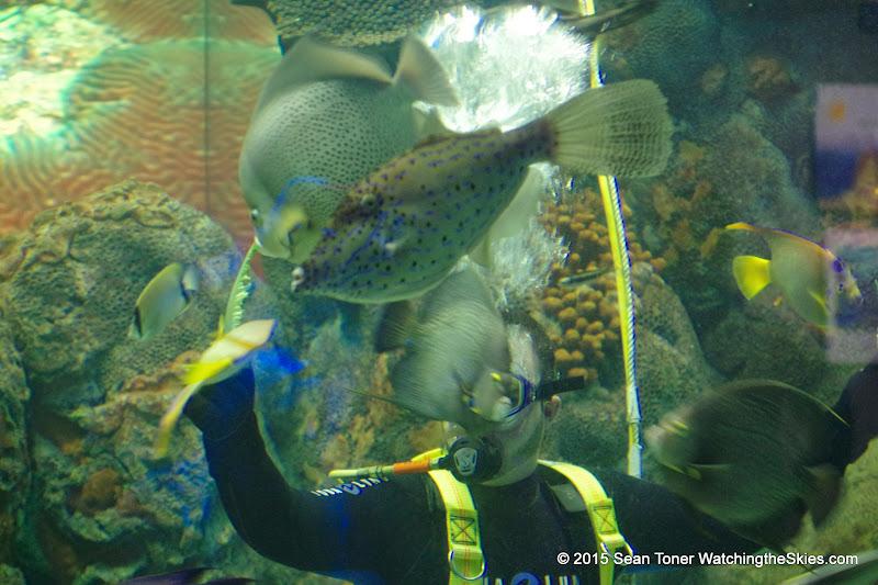 02-08-15 Corpus Christi Aquarium and USS Lexington - _IMG0514.JPG